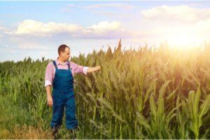 Farm Workers, California